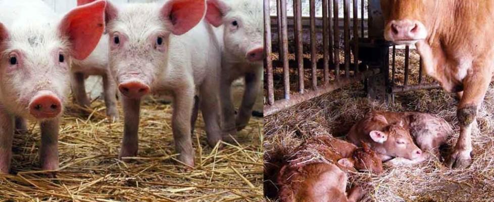alimenti-per-animali